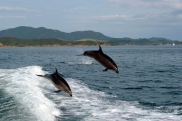 swim-with-dolphins.jpg