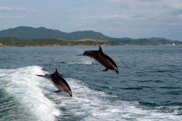 swim-with-dolphins.jpg