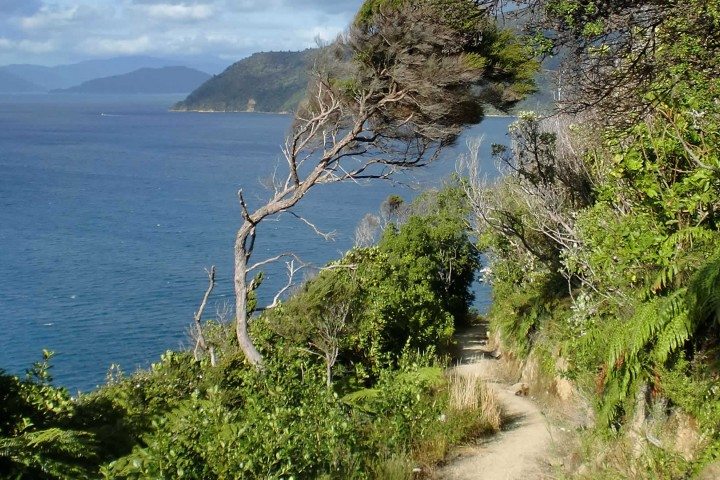 Walk or cycle the Queen Charlotte Track